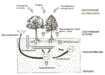 Рис. 3. Схема круговорота азота. .  КРУГОВОРОТ ВЕЩЕСТВ - в природе.